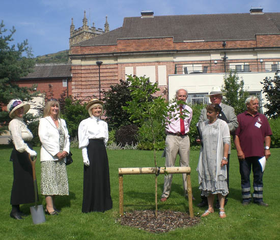 Sapling planted in Priory Park